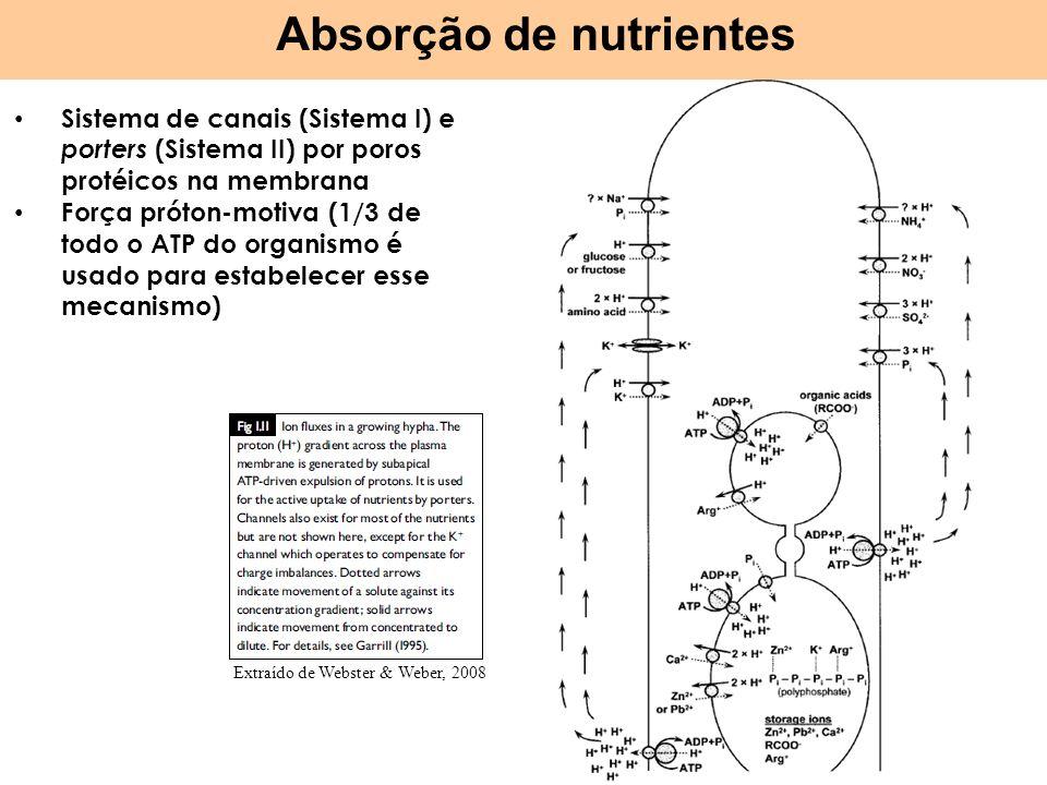 Absorção de nutrientes Sistema de canais (Sistema I) e porters (Sistema II) por poros protéicos na membrana Força próton-motiva (1/3 de todo o ATP do