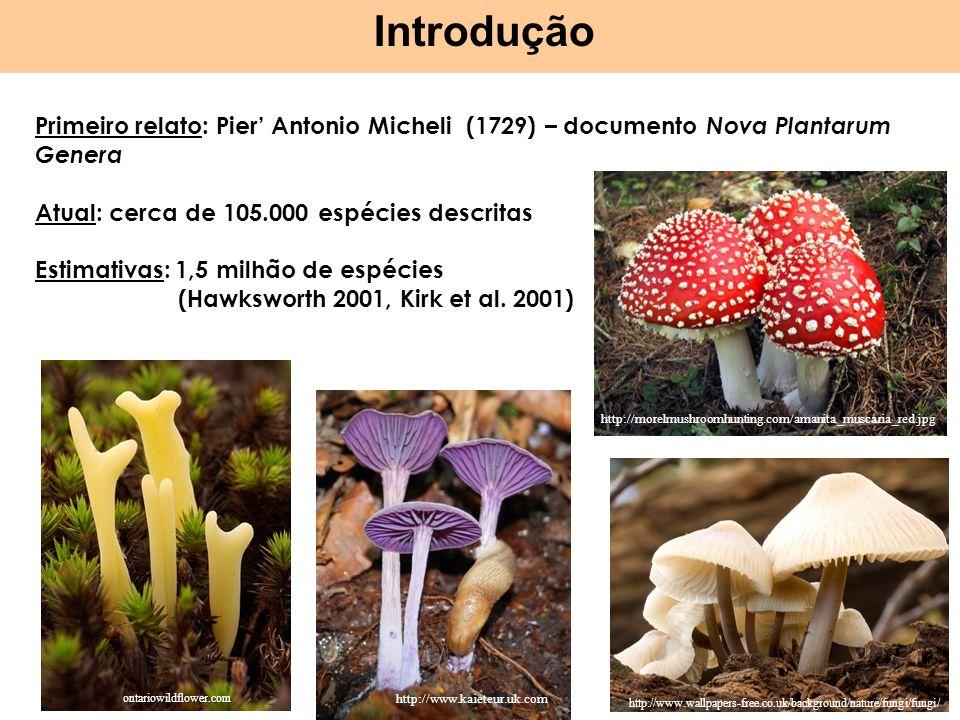 Introdução Primeiro relato: Pier Antonio Micheli (1729) – documento Nova Plantarum Genera Atual: cerca de 105.000 espécies descritas Estimativas: 1,5