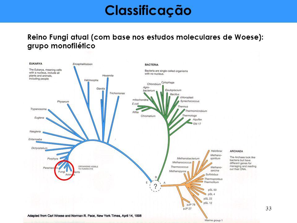 Classificação Reino Fungi atual (com base nos estudos moleculares de Woese): grupo monofilético 33