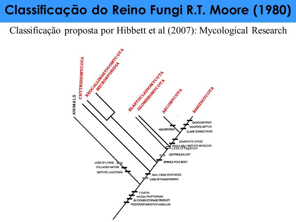 CHYTRIDIOMYCOTA NEOCALLIMASTIGOMYCOTA MICROSPORIDIA BLASTOCLADIOMYCOTA GLOMEROMYCOTA BASIDIOYCOTA Classificação do Reino Fungi R.T. Moore (1980) ASCOM
