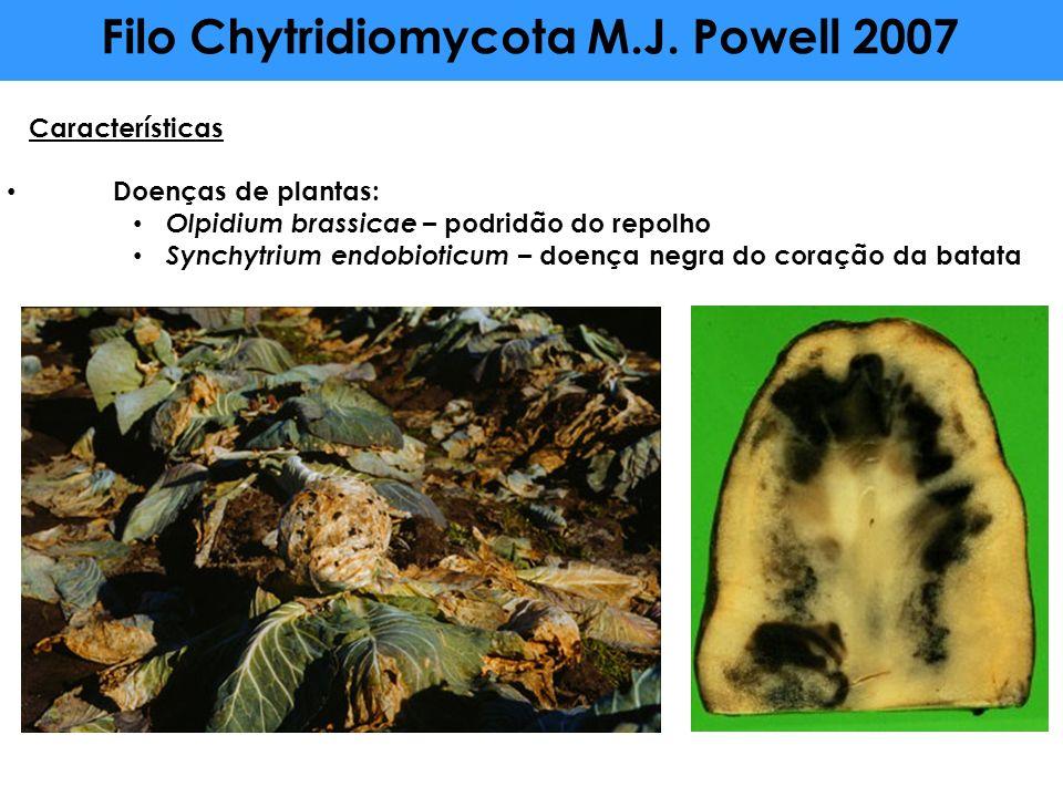Características Doenças de plantas: Olpidium brassicae – podridão do repolho Synchytrium endobioticum – doença negra do coração da batata Filo Chytrid