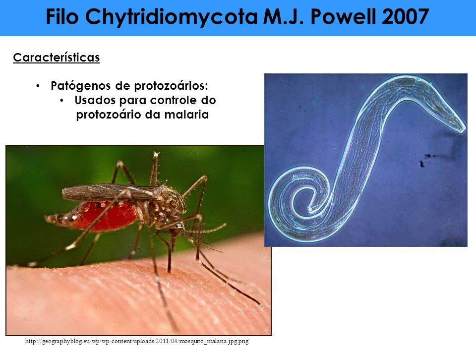 Características Patógenos de protozoários: Usados para controle do protozoário da malaria Filo Chytridiomycota M.J. Powell 2007 http://geographyblog.e