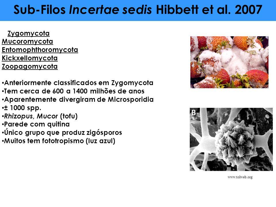 Sub-Filos Incertae sedis Hibbett et al. 2007 Zygomycota Mucoromycota Entomophthoromycota Kickxellomycota Zoopagomycota Anteriormente classificados em