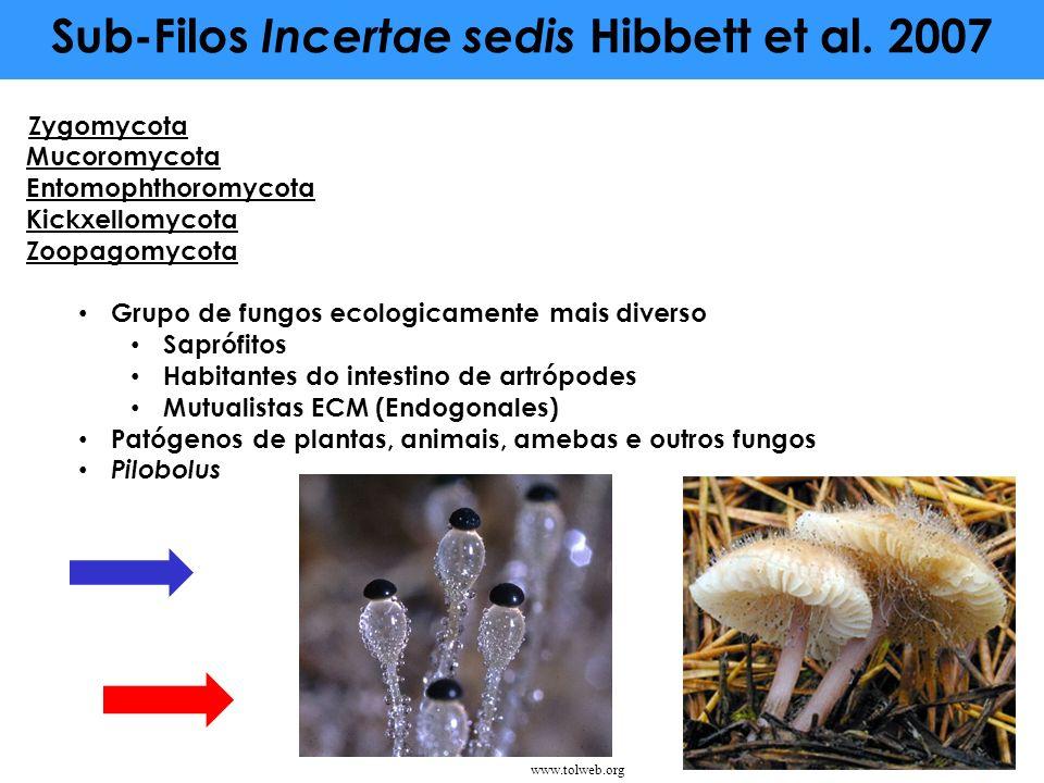Sub-Filos Incertae sedis Hibbett et al. 2007 Zygomycota Mucoromycota Entomophthoromycota Kickxellomycota Zoopagomycota Grupo de fungos ecologicamente