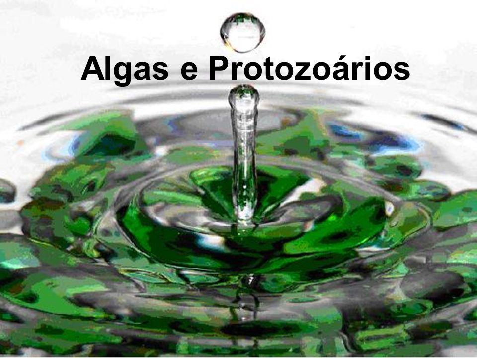 As algas contém clorofila coloração verde.