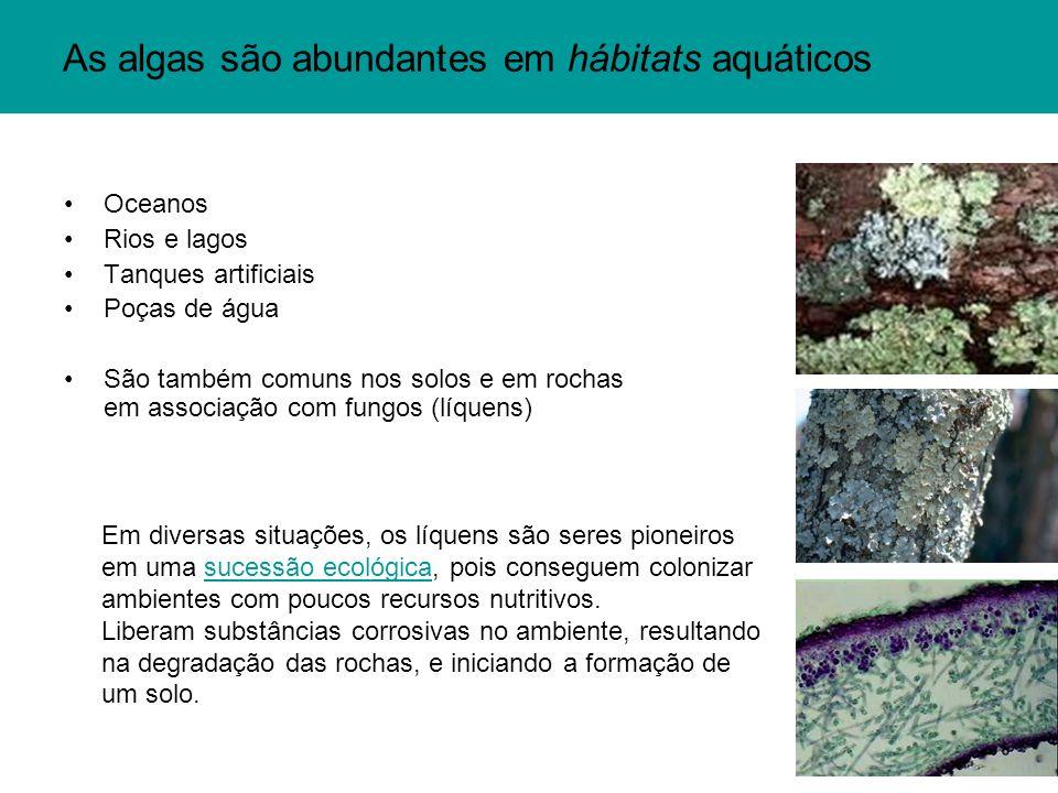 As algas são abundantes em hábitats aquáticos Oceanos Rios e lagos Tanques artificiais Poças de água São também comuns nos solos e em rochas em associação com fungos (líquens) Em diversas situações, os líquens são seres pioneiros em uma sucessão ecológica, pois conseguem colonizar ambientes com poucos recursos nutritivos.sucessão ecológica Liberam substâncias corrosivas no ambiente, resultando na degradação das rochas, e iniciando a formação de um solo.