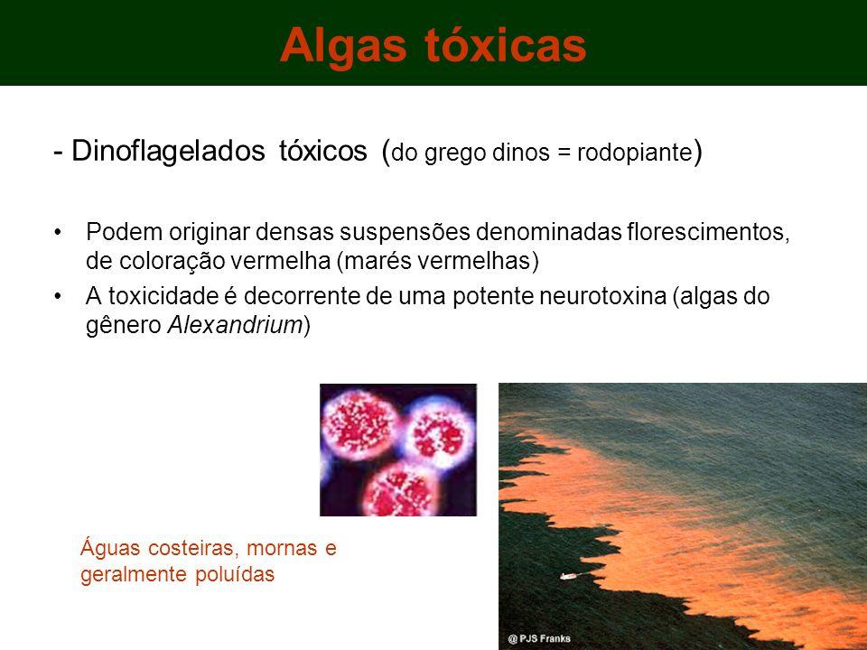 - Dinoflagelados tóxicos ( do grego dinos = rodopiante ) Podem originar densas suspensões denominadas florescimentos, de coloração vermelha (marés vermelhas) A toxicidade é decorrente de uma potente neurotoxina (algas do gênero Alexandrium) Algas tóxicas Águas costeiras, mornas e geralmente poluídas