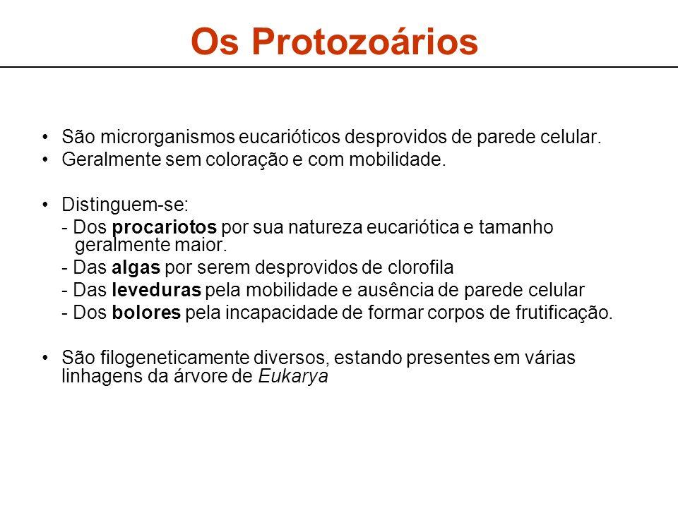 Os Protozoários São microrganismos eucarióticos desprovidos de parede celular.