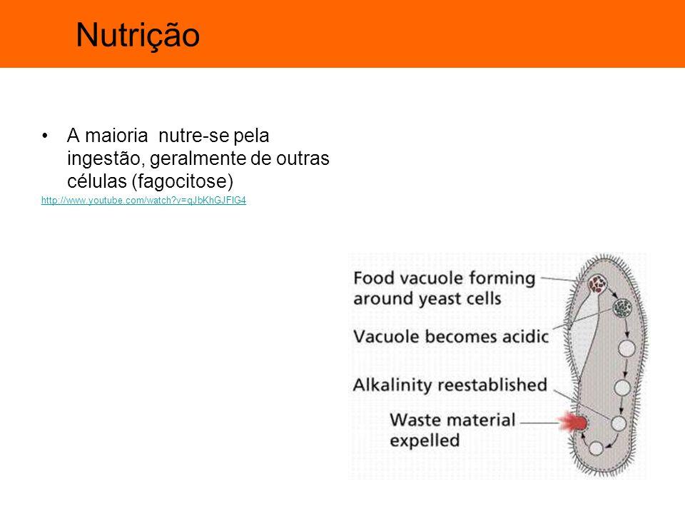Nutrição A maioria nutre-se pela ingestão, geralmente de outras células (fagocitose) http://www.youtube.com/watch?v=qJbKhGJFIG4