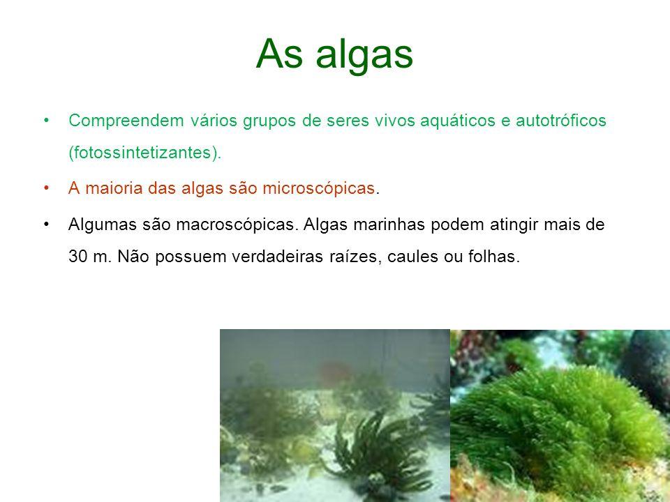 As algas Compreendem vários grupos de seres vivos aquáticos e autotróficos (fotossintetizantes).