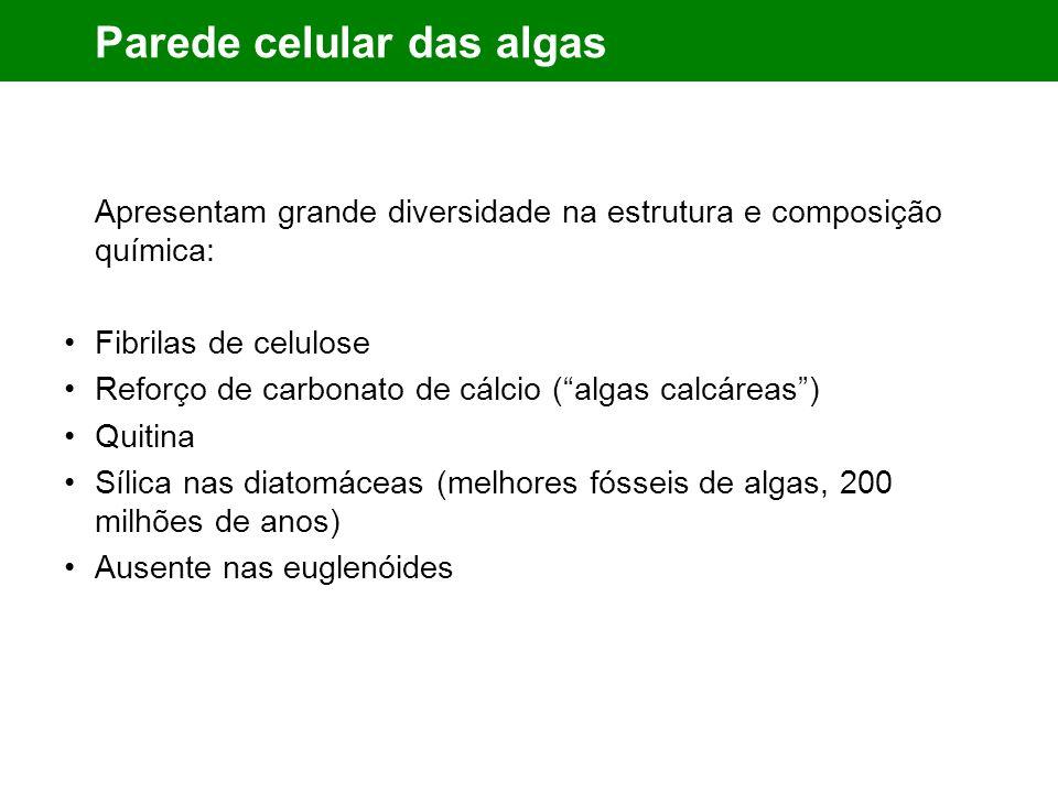 Parede celular das algas Apresentam grande diversidade na estrutura e composição química: Fibrilas de celulose Reforço de carbonato de cálcio (algas calcáreas) Quitina Sílica nas diatomáceas (melhores fósseis de algas, 200 milhões de anos) Ausente nas euglenóides