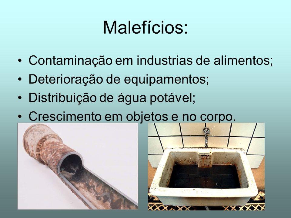Malefícios: Contaminação em industrias de alimentos; Deterioração de equipamentos; Distribuição de água potável; Crescimento em objetos e no corpo.