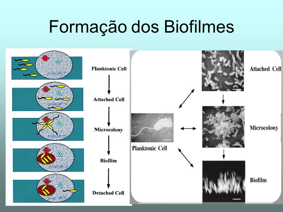 Formação dos Biofilmes