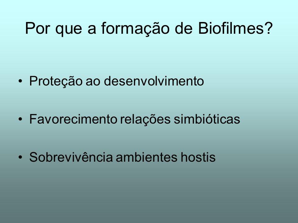 Por que a formação de Biofilmes? Proteção ao desenvolvimento Favorecimento relações simbióticas Sobrevivência ambientes hostis