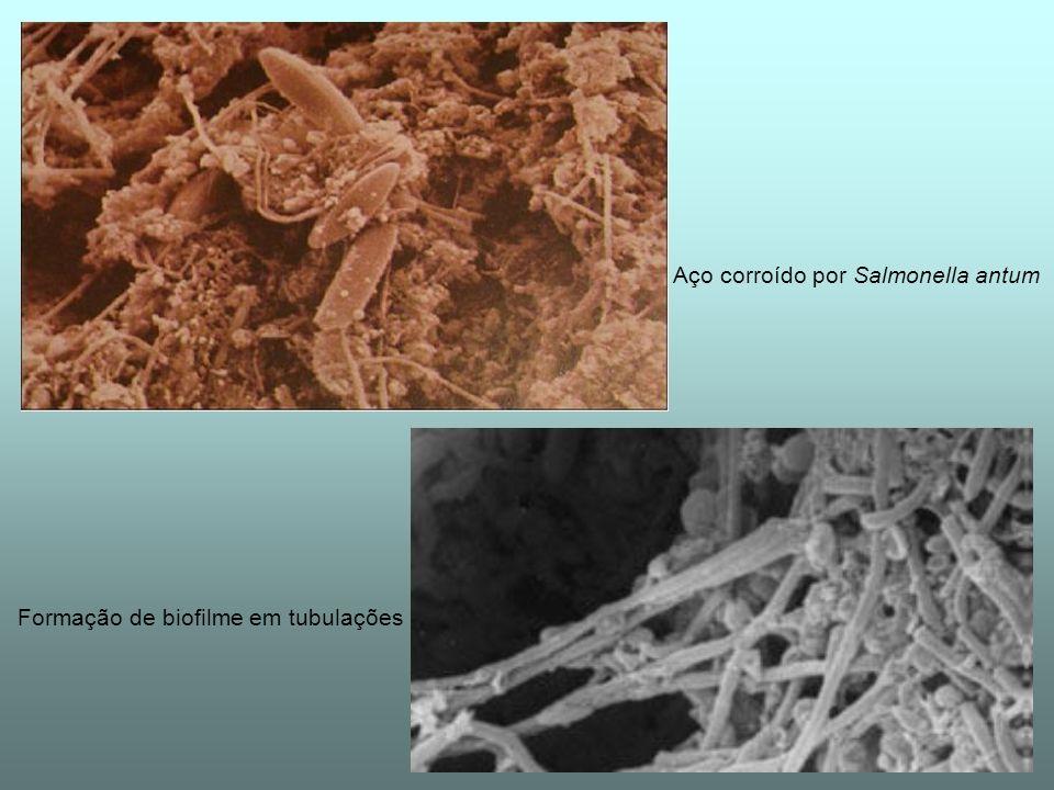 Aço corroído por Salmonella antum Formação de biofilme em tubulações