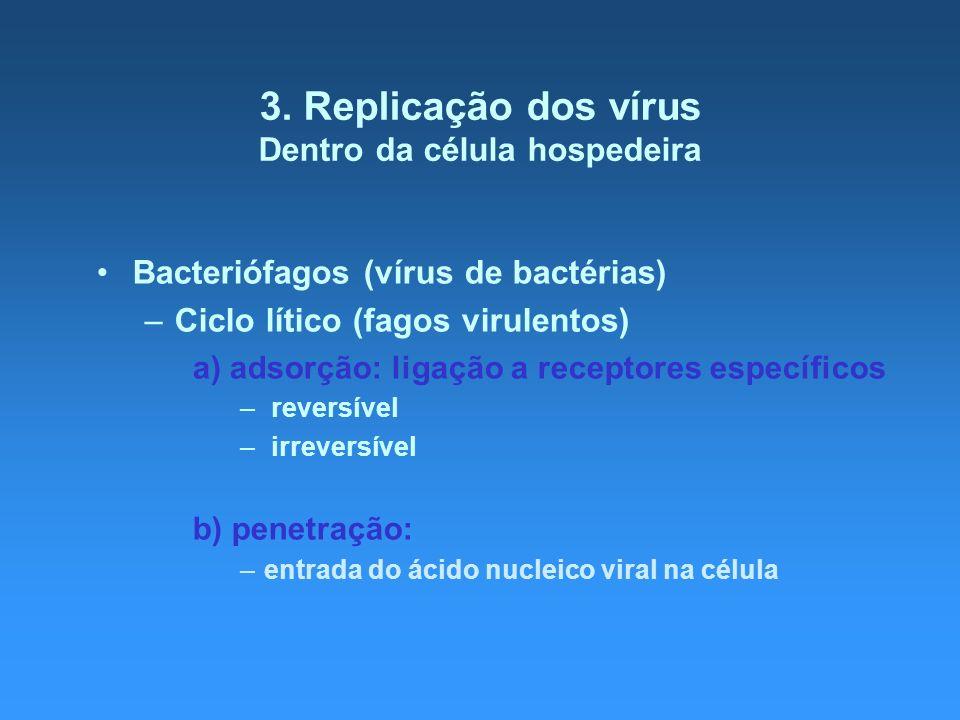 3. Replicação dos vírus Dentro da célula hospedeira Bacteriófagos (vírus de bactérias) –Ciclo lítico (fagos virulentos) a) adsorção: ligação a recepto