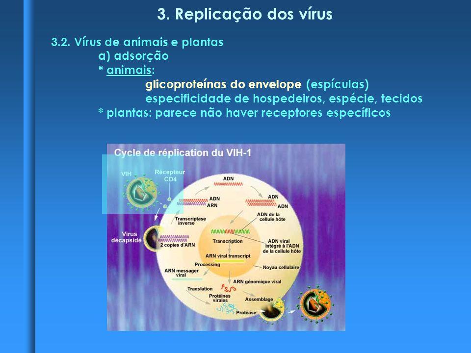 3.Replicação dos vírus 3.2.