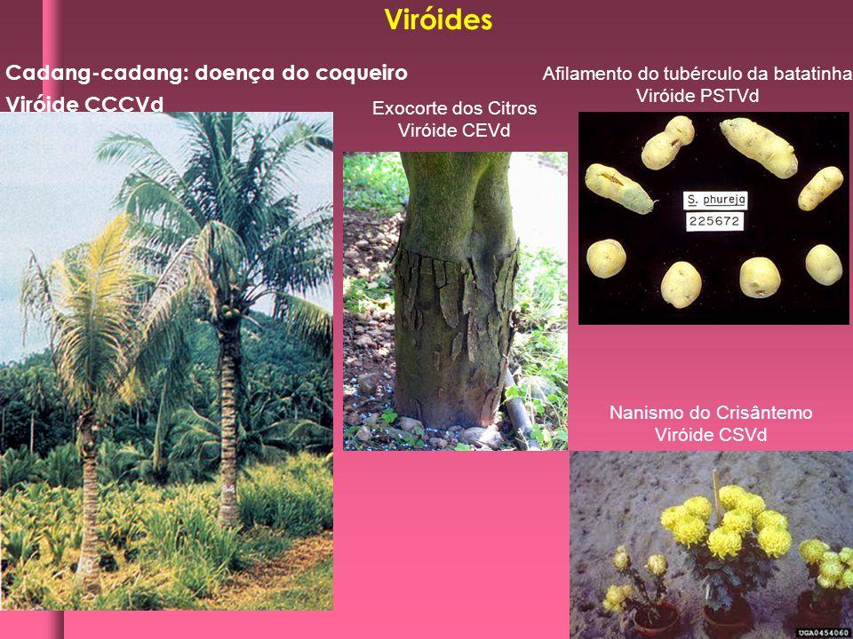 Cadang-cadang: doença do coqueiro Viróide CCCVd Viróides Afilamento do tubérculo da batatinha Viróide PSTVd Exocorte dos Citros Viróide CEVd Nanismo d
