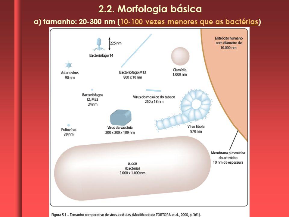 a) tamanho: 20-300 nm (10-100 vezes menores que as bactérias) 2.2. Morfologia básica