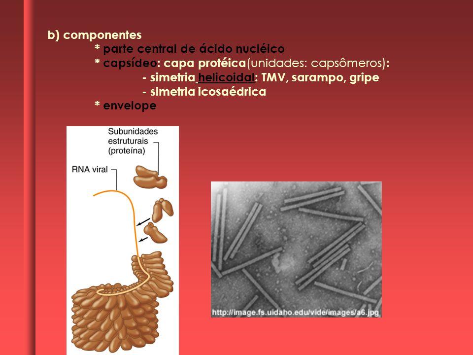 b) componentes * parte central de ácido nucléico * capsídeo: capa protéica (unidades: capsômeros) : - simetria helicoidal: TMV, sarampo, gripe - simetria icosaédrica * envelope