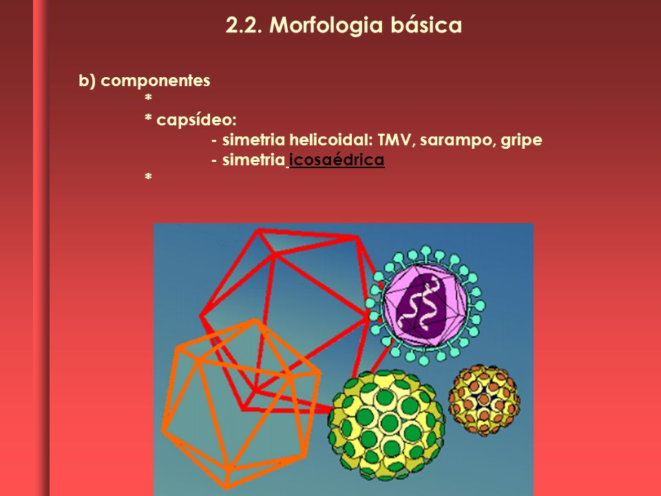 b) componentes * * capsídeo: - simetria helicoidal: TMV, sarampo, gripe - simetria icosaédrica * 2.2. Morfologia básica
