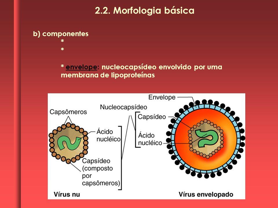 b) componentes * * envelope: nucleocapsídeo envolvido por uma membrana de lipoproteínas 2.2. Morfologia básica