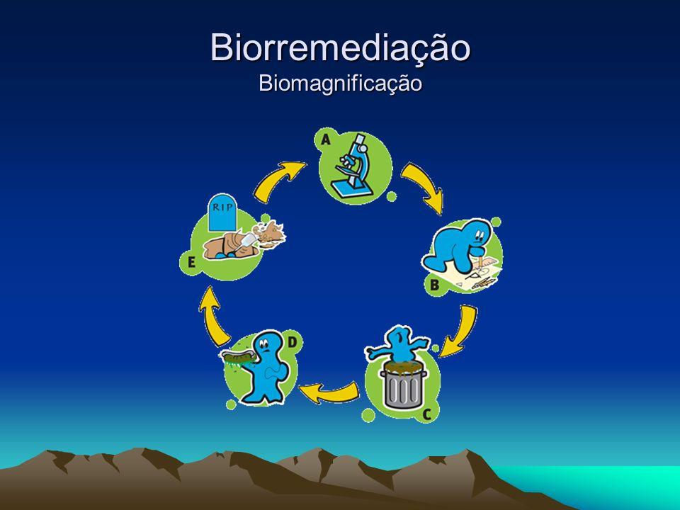 Biorremediação Biomagnificação