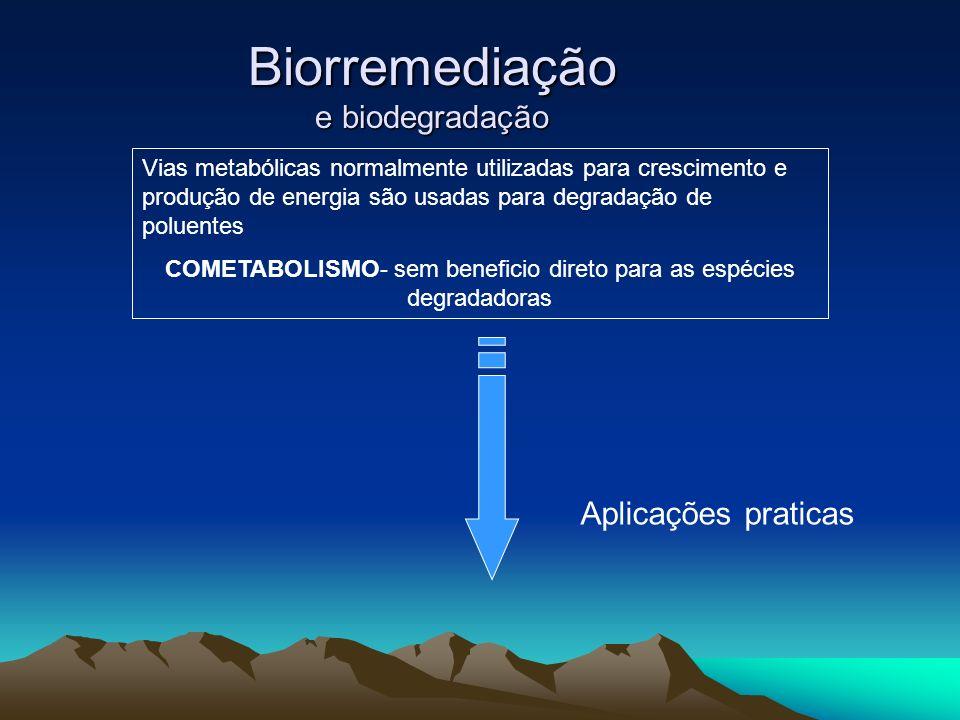 Biorremediação e biodegradação Vias metabólicas normalmente utilizadas para crescimento e produção de energia são usadas para degradação de poluentes