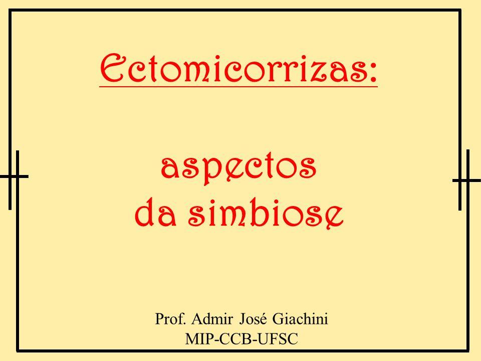Ectomicorrizas: aspectos da simbiose Prof. Admir José Giachini MIP-CCB-UFSC