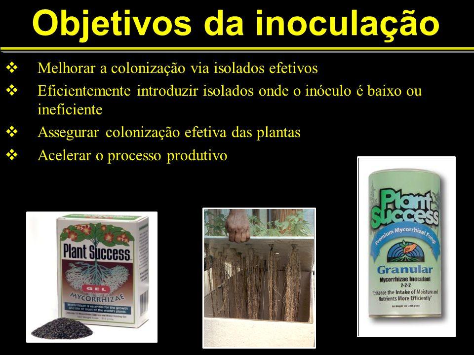 Objetivos da inoculação Melhorar a colonização via isolados efetivos Eficientemente introduzir isolados onde o inóculo é baixo ou ineficiente Assegura