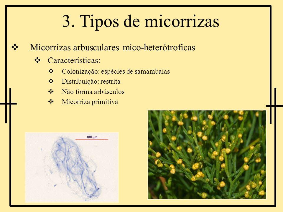 3. Tipos de micorrizas Micorrizas arbusculares mico-heterótroficas Características: Colonização: espécies de samambaias Distribuição: restrita Não for
