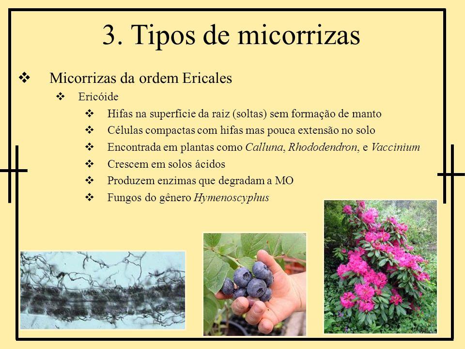 3. Tipos de micorrizas Micorrizas da ordem Ericales Ericóide Hifas na superfície da raiz (soltas) sem formação de manto Células compactas com hifas ma