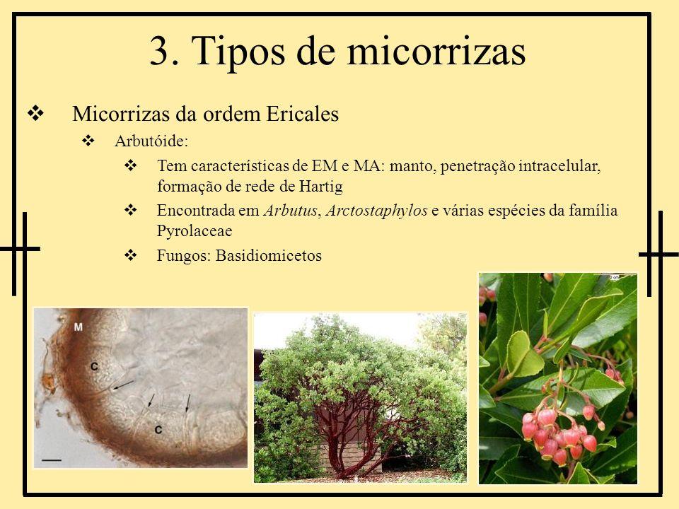 3. Tipos de micorrizas Micorrizas da ordem Ericales Arbutóide: Tem características de EM e MA: manto, penetração intracelular, formação de rede de Har