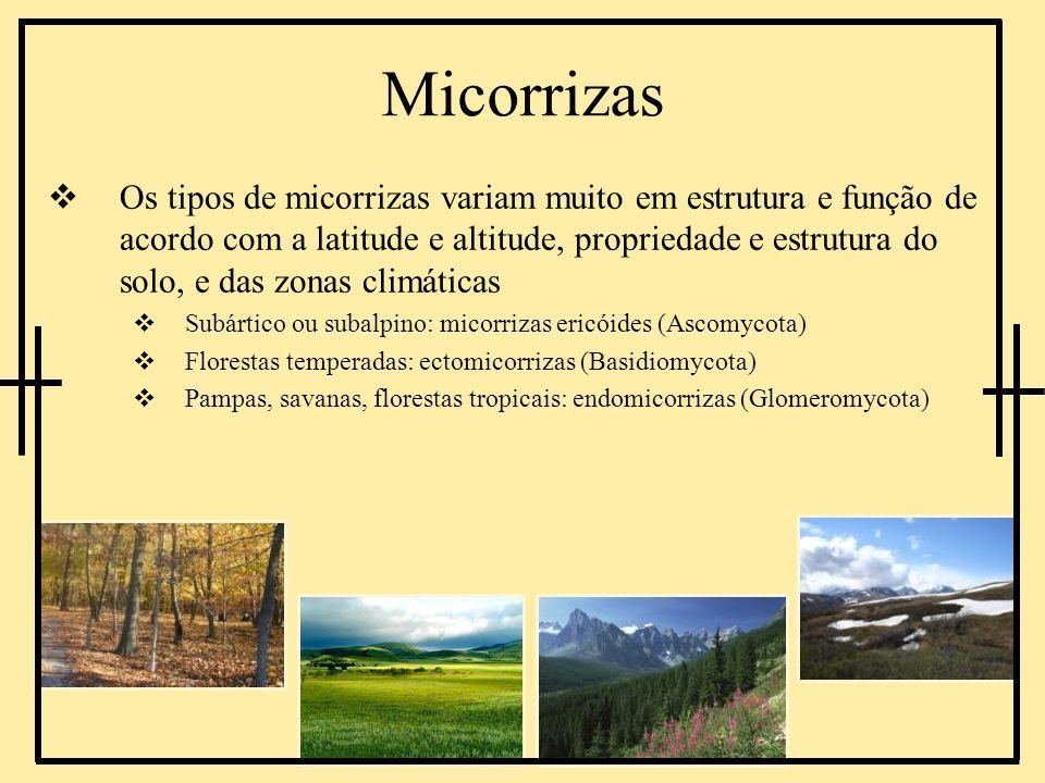 Os tipos de micorrizas variam muito em estrutura e função de acordo com a latitude e altitude, propriedade e estrutura do solo, e das zonas climáticas