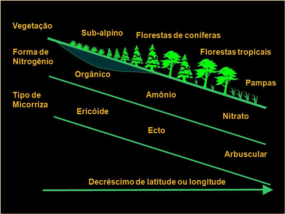 Tipo de Micorriza Forma de Nitrogênio Vegetação Decréscimo de latitude ou longitude Ericóide Ecto Arbuscular Orgânico Amônio Nitrato Pampas Florestas