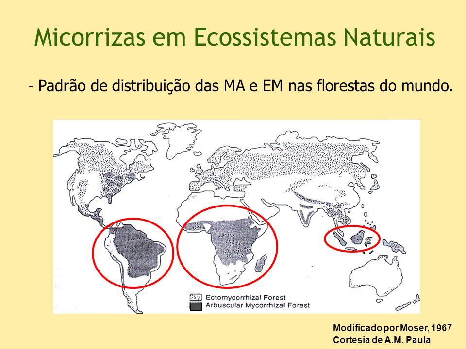Micorrizas em Ecossistemas Naturais Modificado por Moser, 1967 Cortesia de A.M. Paula - Padrão de distribuição das MA e EM nas florestas do mundo.