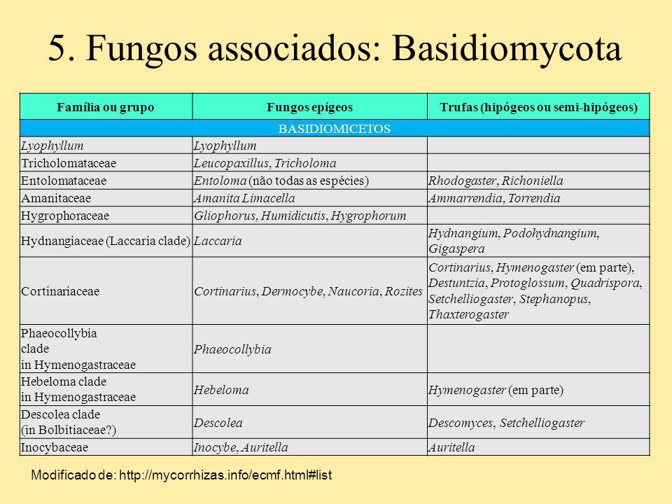 5. Fungos associados: Basidiomycota Família ou grupoFungos epígeosTrufas (hipógeos ou semi-hipógeos) BASIDIOMICETOS Lyophyllum TricholomataceaeLeucopa
