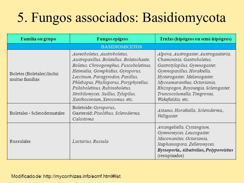 Família ou grupoFungos epígeosTrufas (hipógeos ou semi-hipógeos) BASIDIOMICETOS Boletes (Boletales) Inclui muitas famílias Aureoboletus, Austroboletus