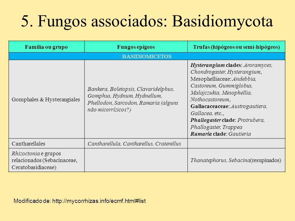 Família ou grupoFungos epígeosTrufas (hipógeos ou semi-hipógeos) BASIDIOMICETOS Gomphales & Hysterangiales Bankera, Boletopsis, Clavaridelphus, Gomphu