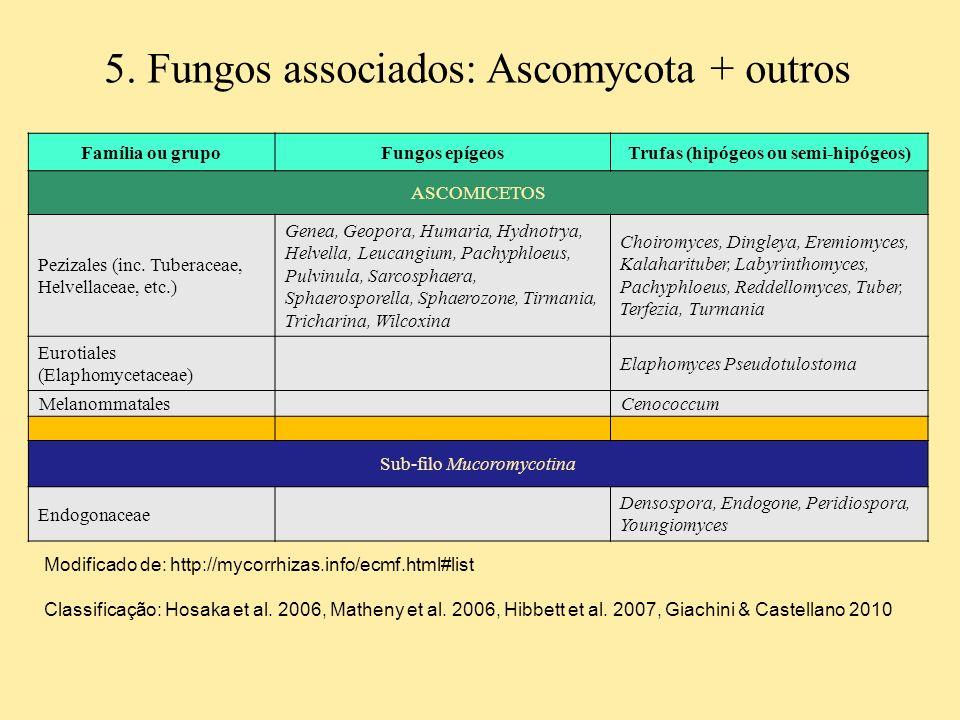 5. Fungos associados: Ascomycota + outros Família ou grupoFungos epígeosTrufas (hipógeos ou semi-hipógeos) ASCOMICETOS Pezizales (inc. Tuberaceae, Hel
