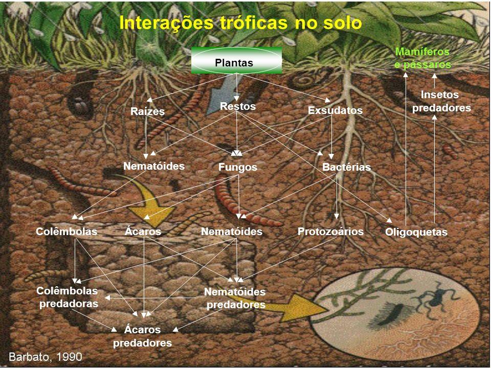 Interações tróficas no solo Raízes Restos Exsudatos Plantas Nematóides FungosBactérias NematóidesColêmbolasÁcarosProtozoários Oligoquetas Colêmbolas p
