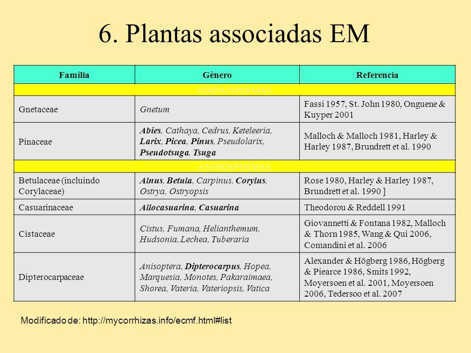 6. Plantas associadas EM FamíliaGêneroReferencia GIMNOSPERMAS GnetaceaeGnetum Fassi 1957, St. John 1980, Onguene & Kuyper 2001 Pinaceae Abies, Cathaya