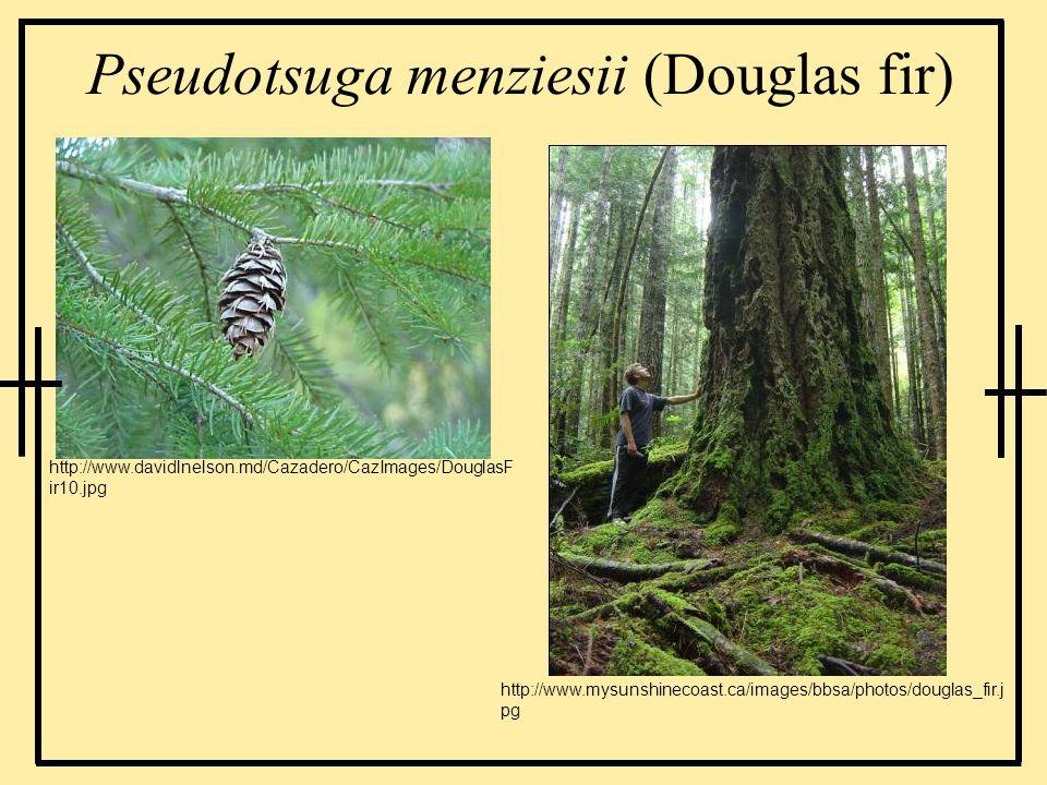 Pseudotsuga menziesii (Douglas fir) http://www.davidlnelson.md/Cazadero/CazImages/DouglasF ir10.jpg http://www.mysunshinecoast.ca/images/bbsa/photos/d