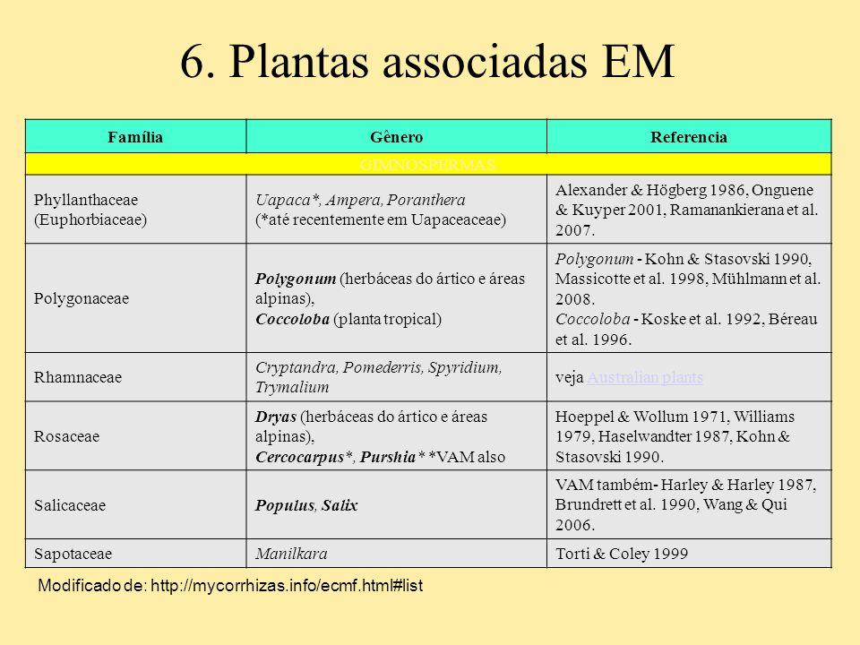 6. Plantas associadas EM FamíliaGêneroReferencia GIMNOSPERMAS Phyllanthaceae (Euphorbiaceae) Uapaca*, Ampera, Poranthera (*até recentemente em Uapacea