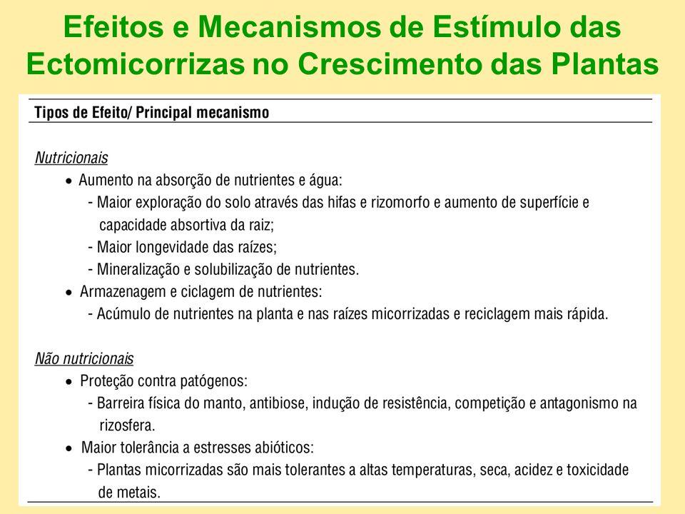 Efeitos e Mecanismos de Estímulo das Ectomicorrizas no Crescimento das Plantas