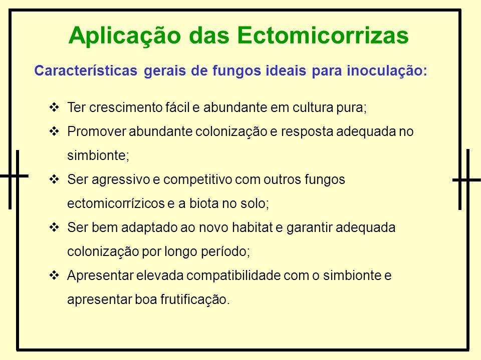 Aplicação das Ectomicorrizas Características gerais de fungos ideais para inoculação: Ter crescimento fácil e abundante em cultura pura; Promover abun