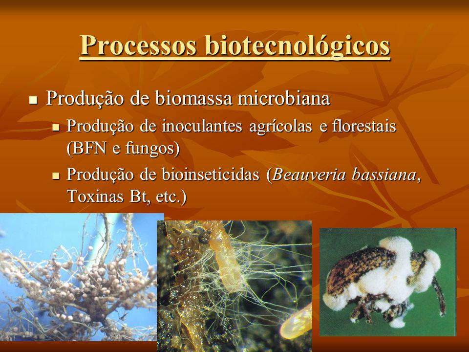 Processos biotecnológicos Produção de biomassa microbiana Produção de biomassa microbiana Produção de inoculantes agrícolas e florestais (BFN e fungos