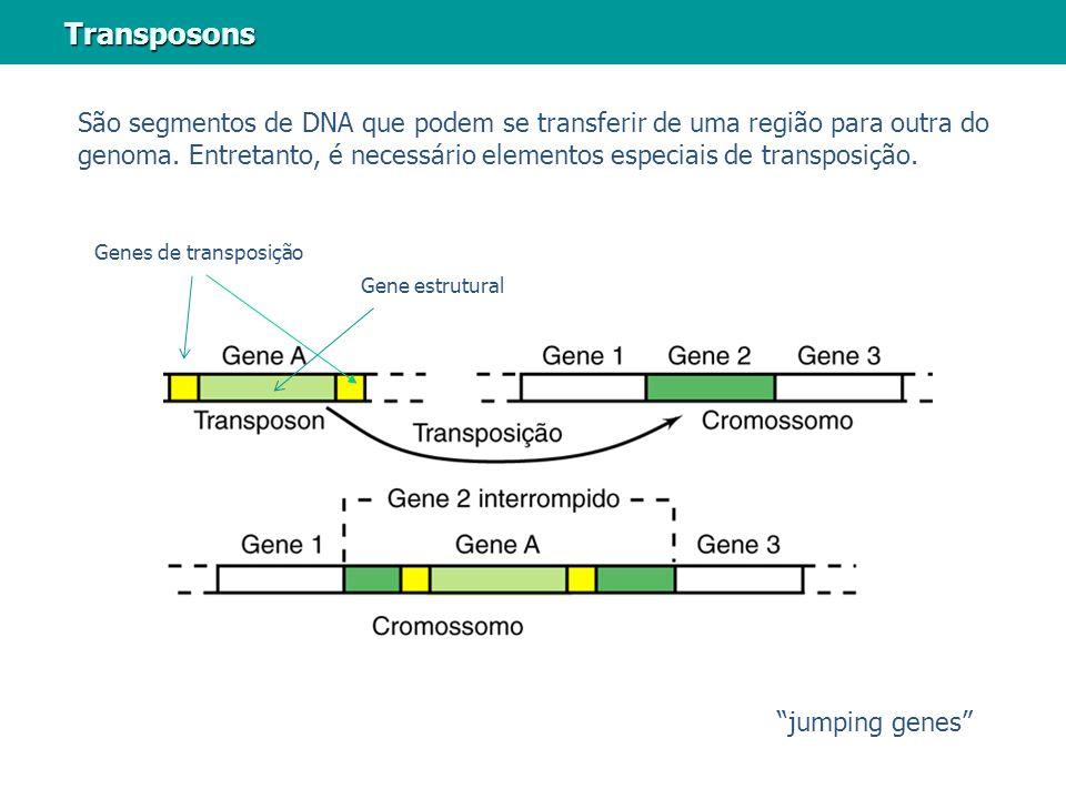 Transposons São segmentos de DNA que podem se transferir de uma região para outra do genoma. Entretanto, é necessário elementos especiais de transposi