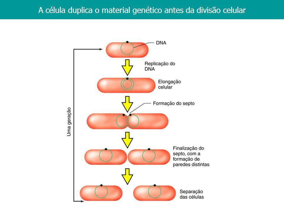 1. Introdução A célula duplica o material genético antes da divisão celular