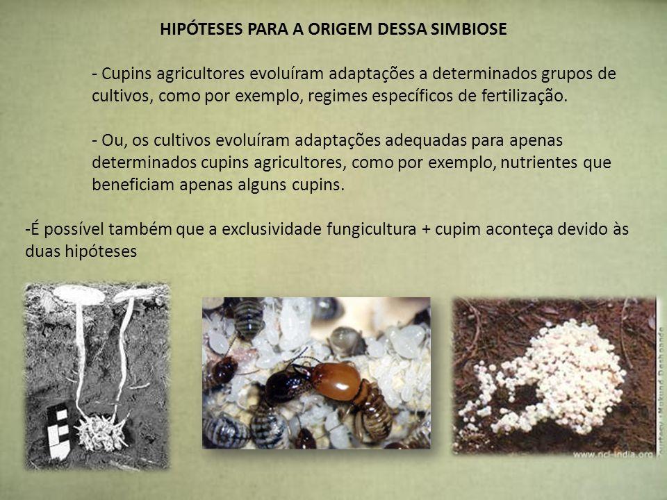 HIPÓTESES PARA A ORIGEM DESSA SIMBIOSE - Cupins agricultores evoluíram adaptações a determinados grupos de cultivos, como por exemplo, regimes específ